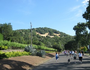 My Trip to San Francisco Part II – Running, Friendship and The Wine Country